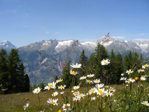 Bergwandelen Alpen Zwitserland